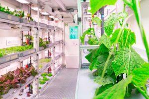 Ирландские биологи вывели овощи для Антарктиды и Марса