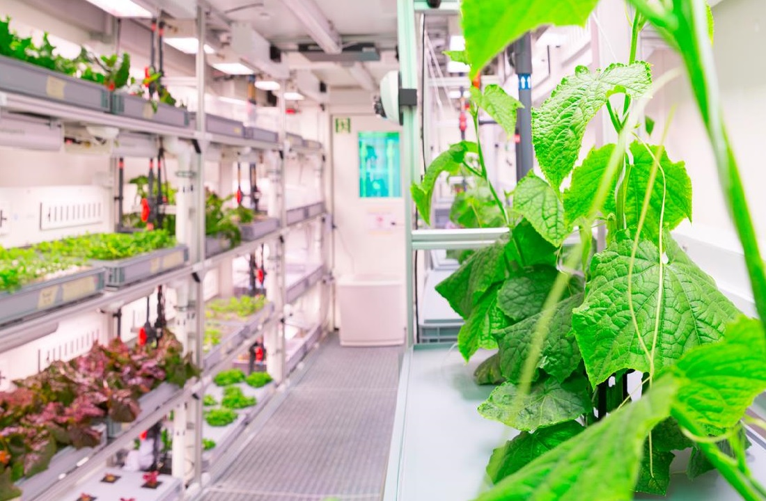 Ирландские биологи вывели овощи для Антарктиды и Марса.Вокруг Света. Украина