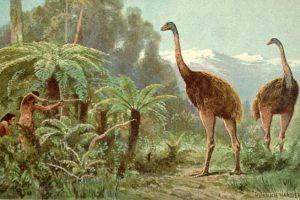 Ученые воссоздали геном птицы, вымершей 700 лет назад