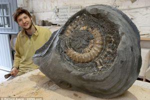 Каменотес из Девона случайно нашел аммонит, которому 190 миллионов лет