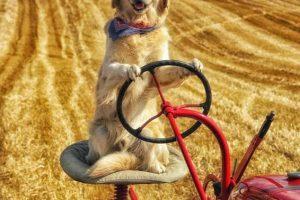 Ирландец научил собаку управлять трактором