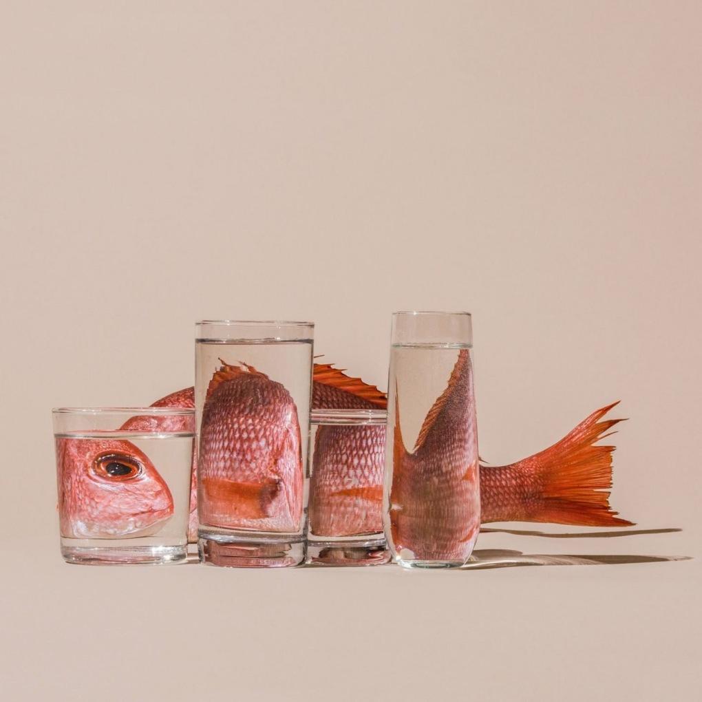 Рыба в кубе: неожиданные снимки через призму воды