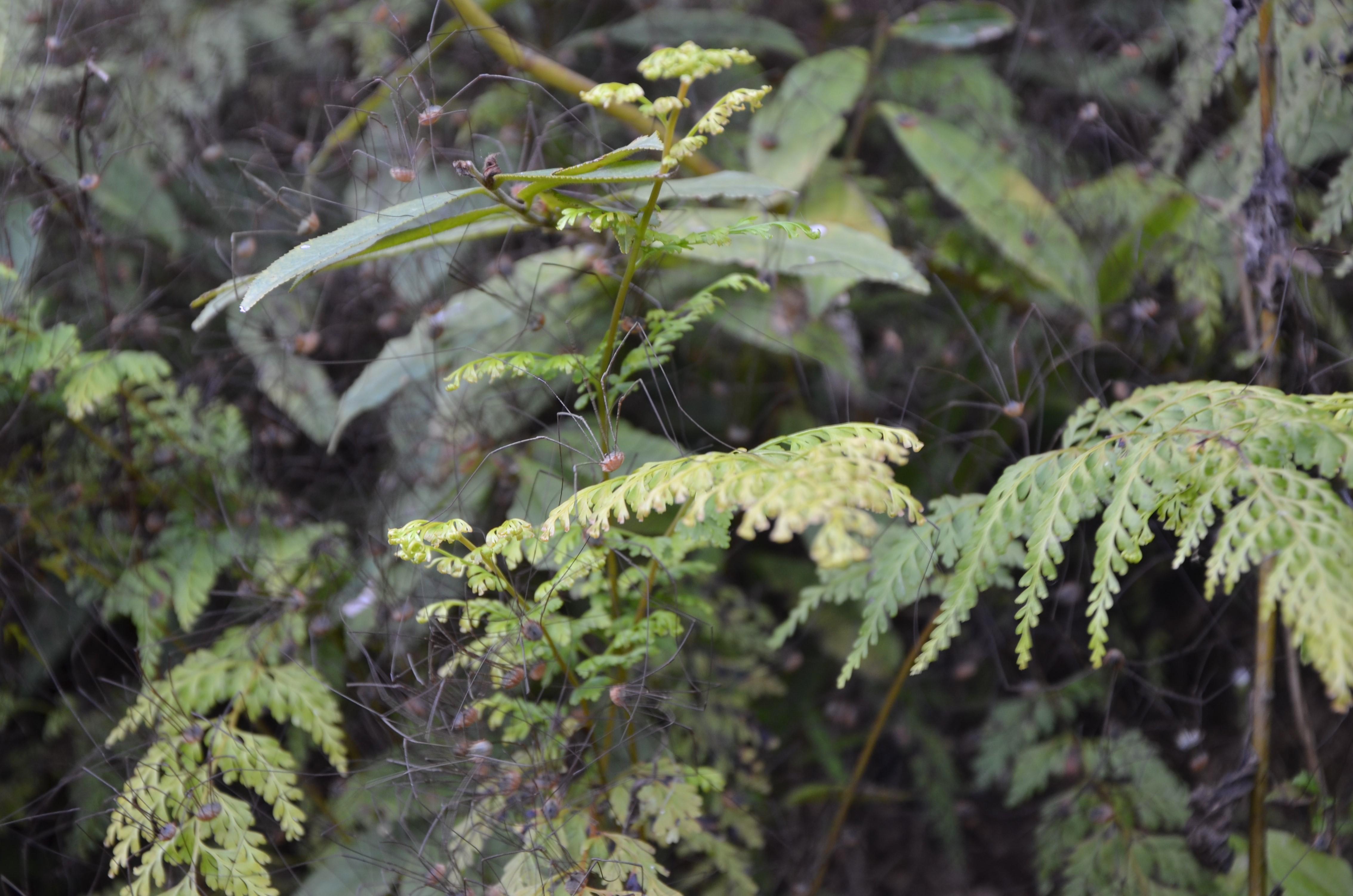 Нави и длинношеие женщины: поход в таиландские джунгли Нави и длинношеие женщины: поход в таиландские джунгли DSC 0753