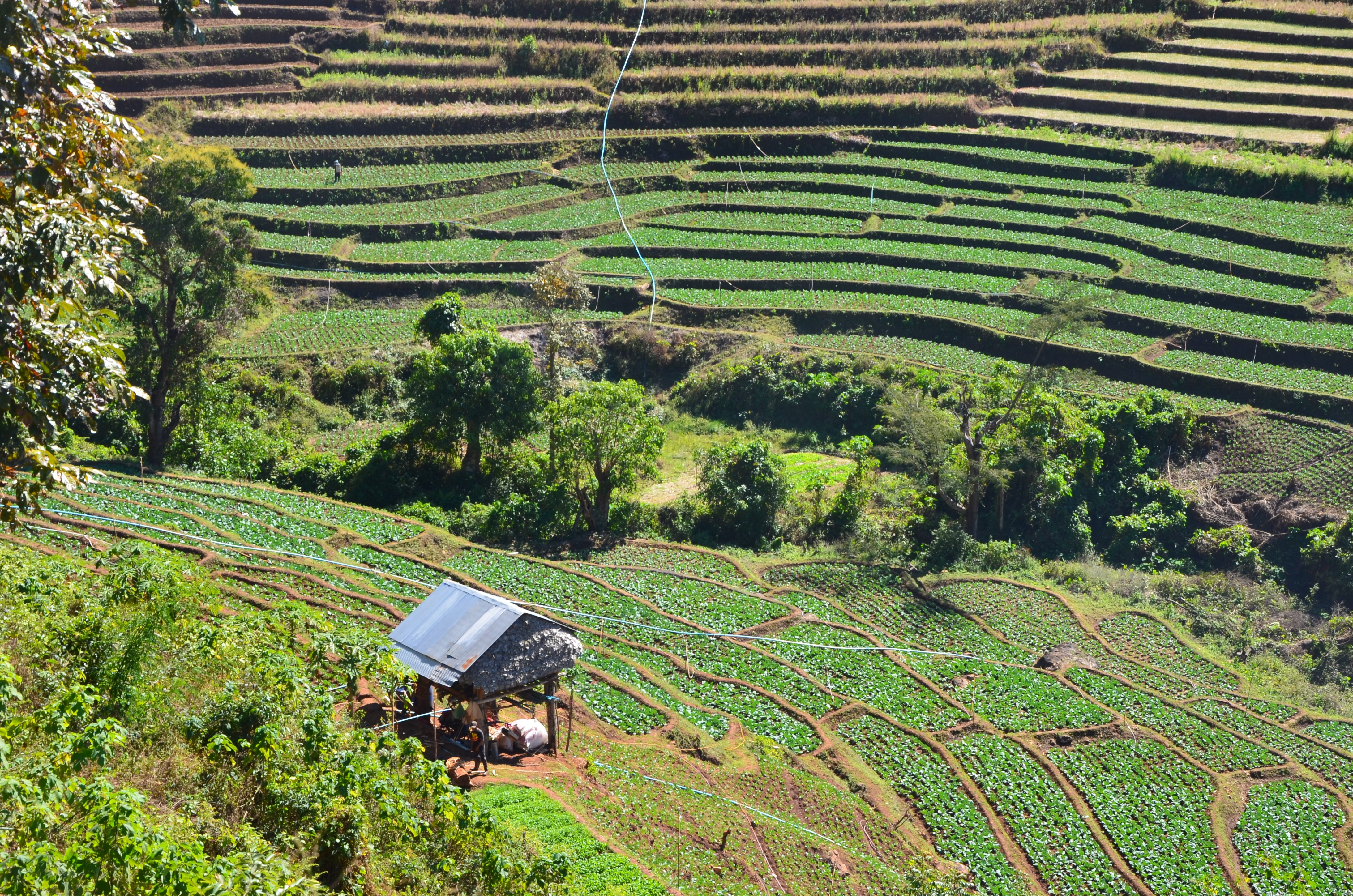Нави и длинношеие женщины: поход в таиландские джунгли Нави и длинношеие женщины: поход в таиландские джунгли DSC 0970