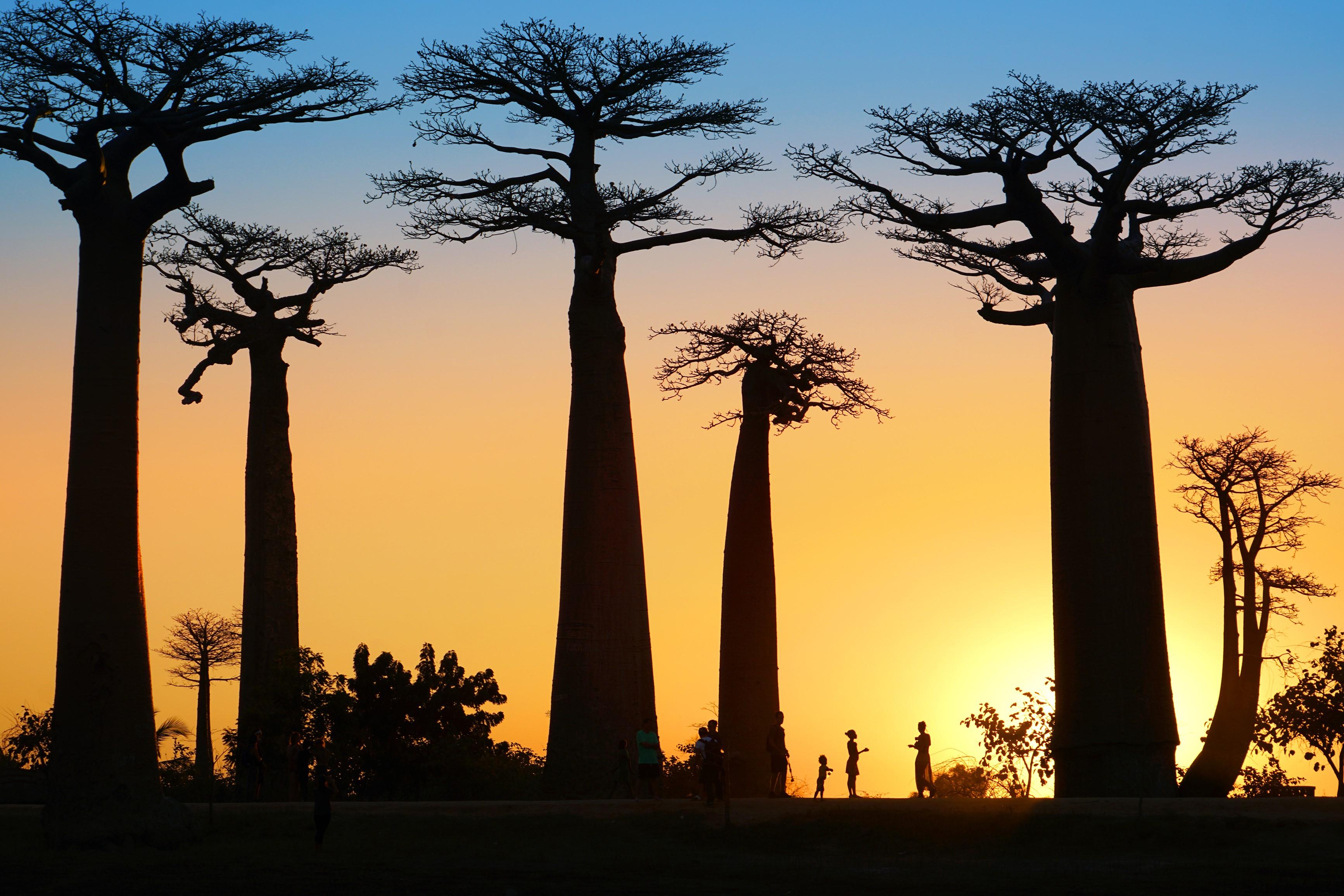 Лемуры, хамелеоны, баобабы: Мадагаскар зовет!