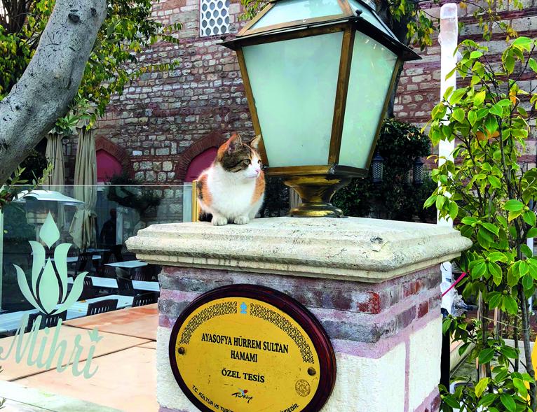 Уличные коты — измеритель уровня добра