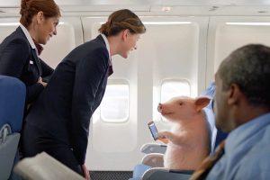 Самые экзотичные животные на борту самолета (фото)