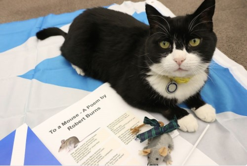 В МИД Британии запретили кормить кота-дипломата