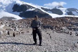 Шериф из «Очень странных дел» станцевал с пингвинами