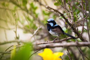 Певчие птицы учат птенцов не перебивать друг друга