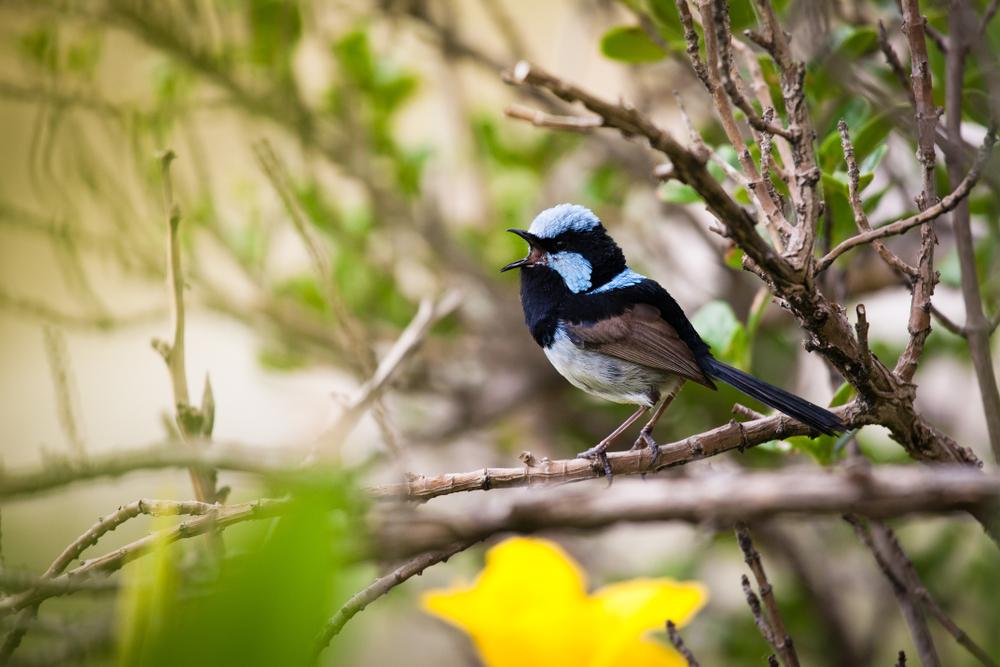 Певчие птицы учат птенцов не перебивать друг друга.Вокруг Света. Украина
