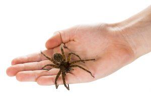 Ученые назвали самое быстрое существо на Земле