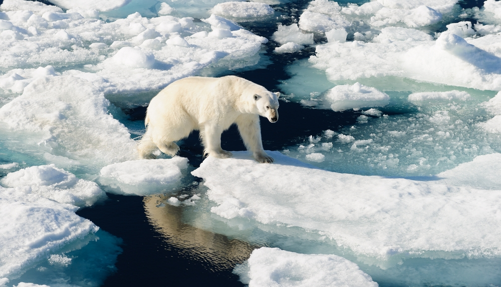 Как таяние льдов Гренландии влияет на остальной мир
