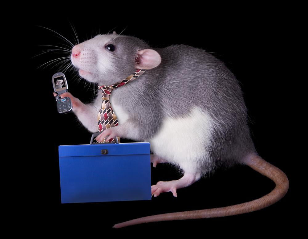 Мобильные телефоны спровоцировали у крыс опухоли.Вокруг Света. Украина