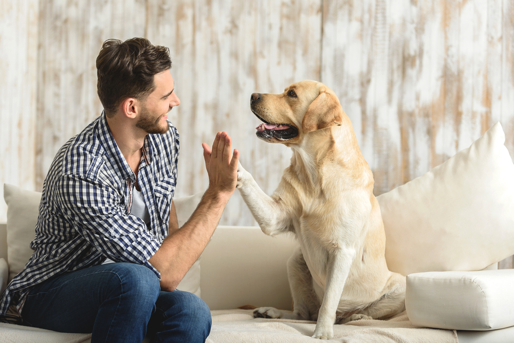 Нервных людей собаки кусают чаще