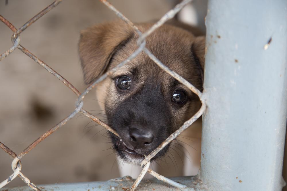 Украинские заключенные смогут держать в камерах рыбок, кошек и собак