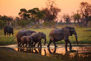 """""""Добро пожаловать в нашу дыру"""": туризм в Африке оживился благодаря Трампу"""