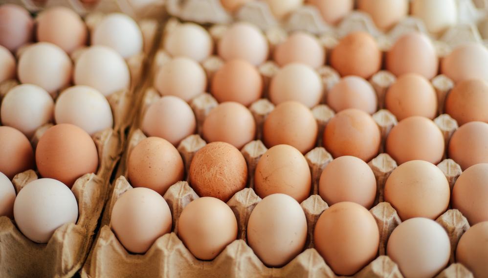 Повар сборной Норвегии из-за ошибки в переводчике Google заказал 15 000 яиц