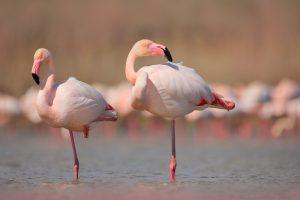 Зачем птицы чистят перья?