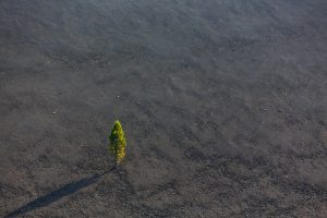 Ученые предлагают строить города из вулканического пепла