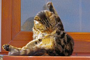 Почему кошки постоянно умываются?