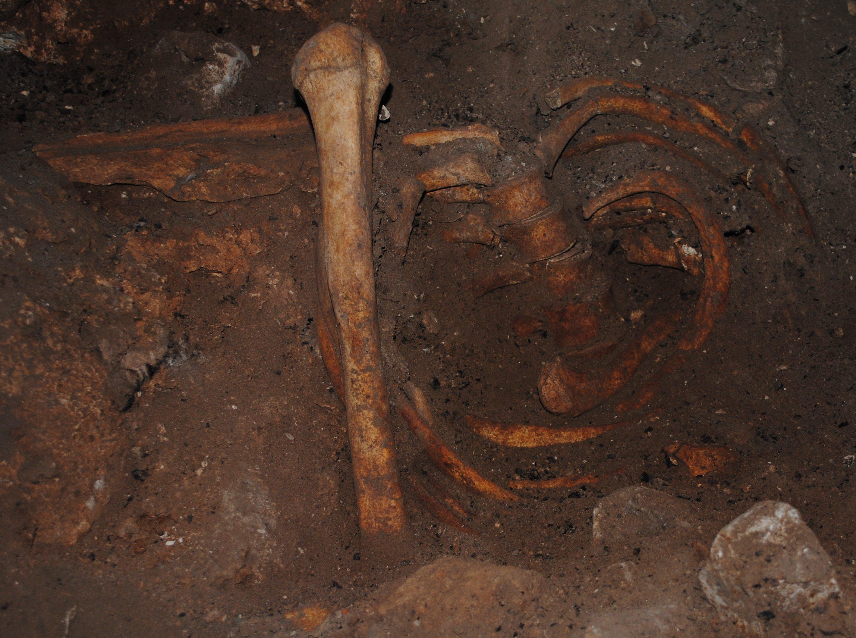 Ученые впервые выделили древнейшую ДНК африканского человека