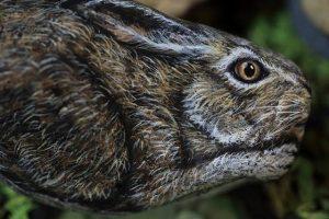 Японка превращает камни в животных