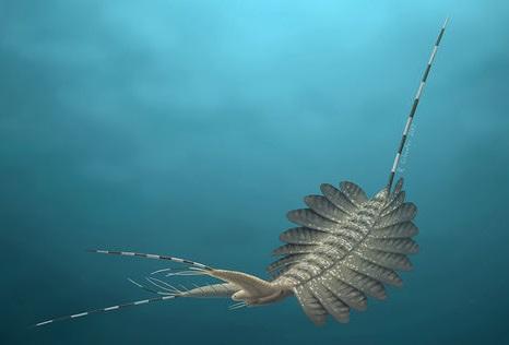 Палеонтологи нашли древнейший мозг морского хищника