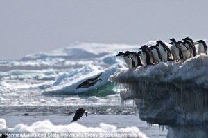 Суперколонию пингвинов обнаружили с помощью спутника