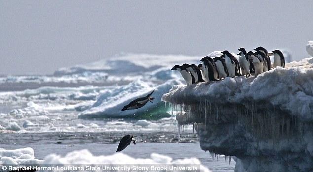 Суперколонию пингвинов обнаружили с помощью спутника.Вокруг Света. Украина
