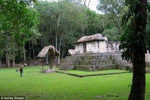Древние майя торговали домашними собаками раньше других