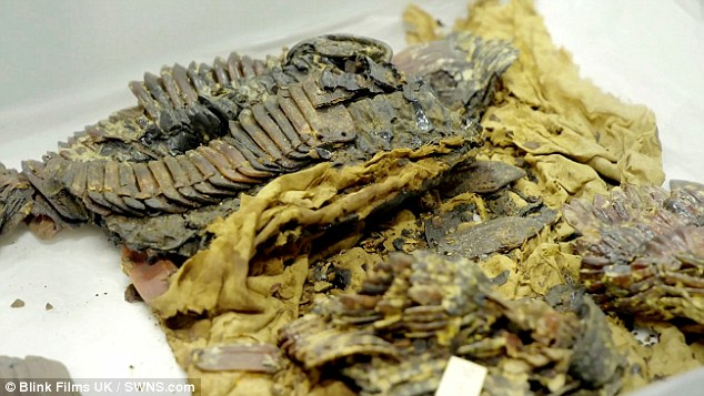Тутанхамон был опытным воином, а не хилым мальчиком Тутанхамон был опытным воином, а не хилым мальчиком 4A92B18C00000578 0 image a 1 1522077663619