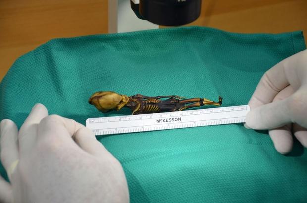Ученые раскрыли секрет пришельца из Атакамы