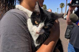 В Америке полтора часа онлайн спасали кошку