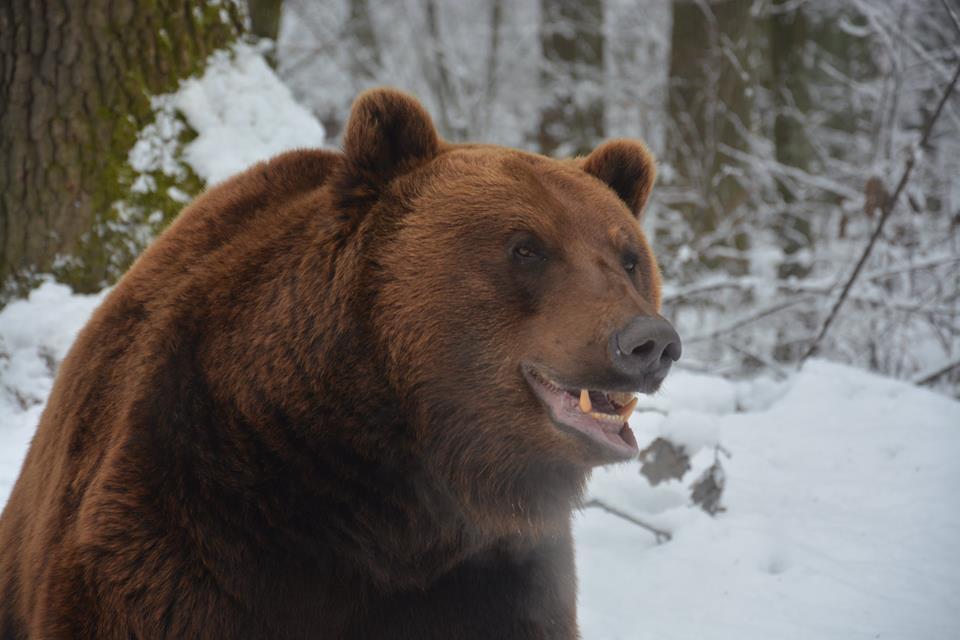 На Львовщине медвежий приют приглашает эко-туристов