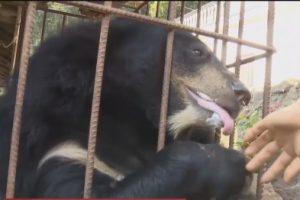 Китайский фермер вырастил из собаки медведя