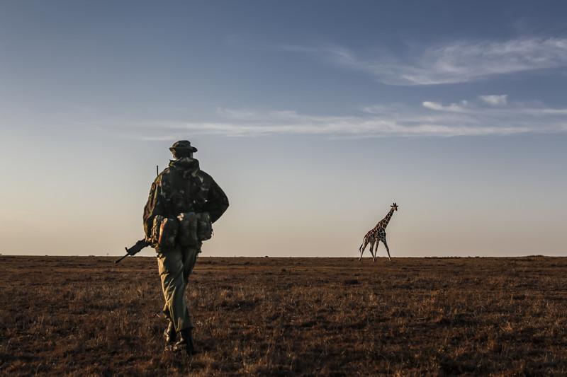 К концу столетия в Африке вымрет половина видов животных — ООН