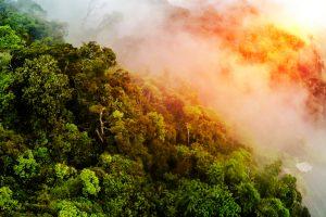 Леса Амазонки будут стерты с лица земли изменениями климата