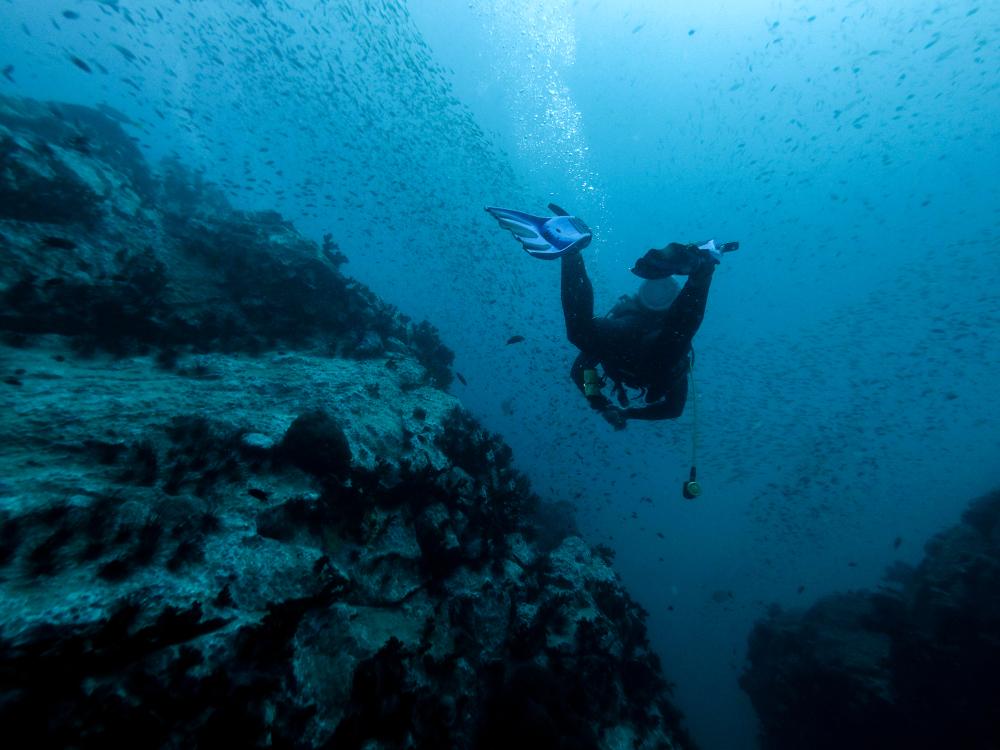 В Карибском море нашли 30 неизвестных науке видов рыб