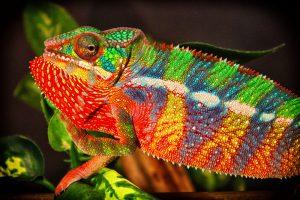 Биохимики создали искусственную кожу хамелеона, меняющую цвет