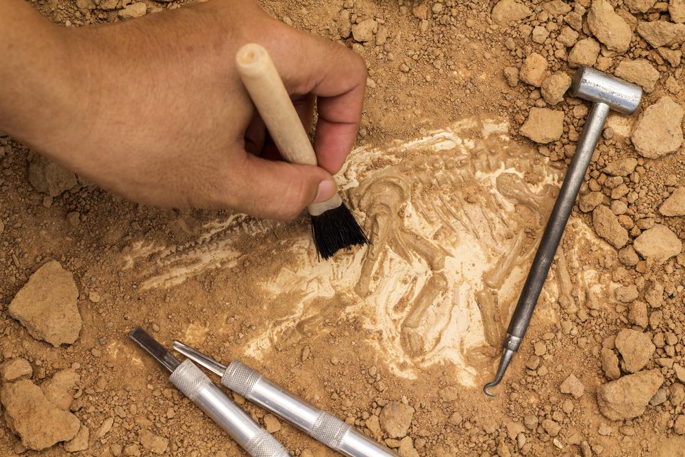 В Китае нашли первые костяные инструменты.Вокруг Света. Украина