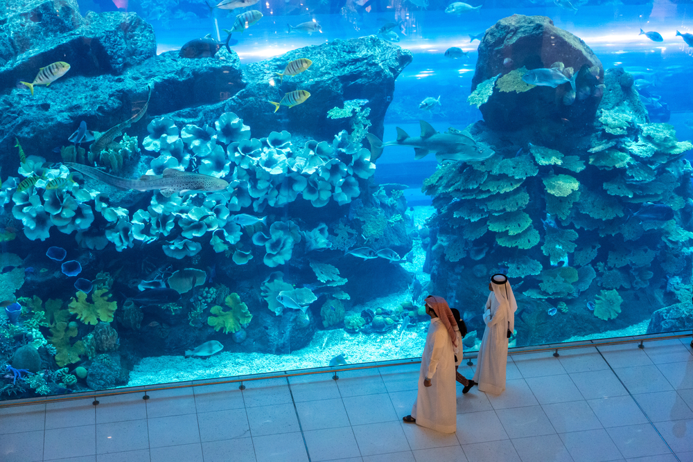 В ОАЭ выращивают коралловые сады
