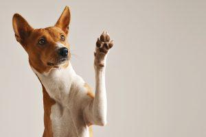 Собаки при розыске вещей пользуются воображением