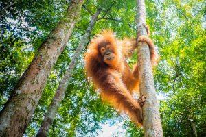 Міжнародний день лісів: 5 тварин, яким ліси життєво необхідні