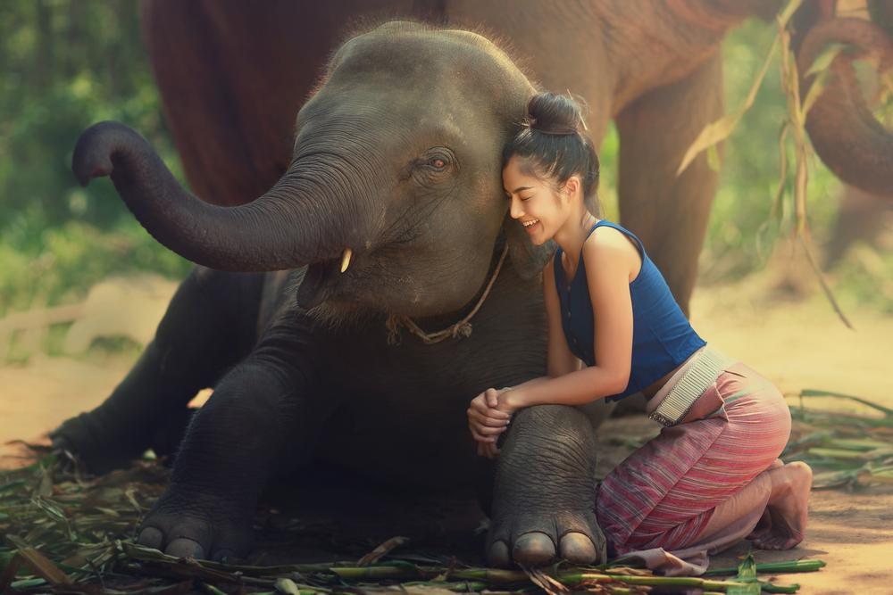 Как слоны и летучие мыши помогут вылечить человека