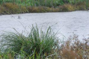 ООН предлагает культивировать болота для спасения человечества