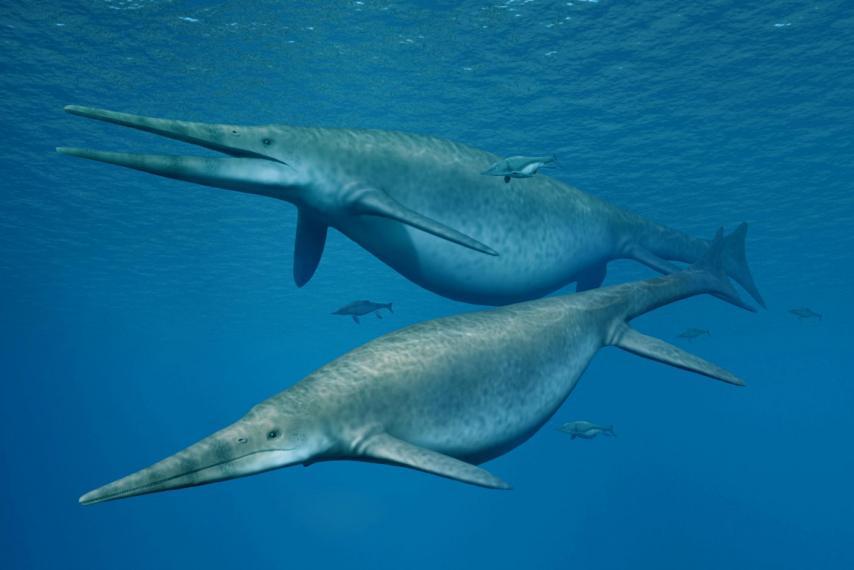 На пляже в Англии нашли челюсть крупнейшего ихтиозавра в истории.Вокруг Света. Украина
