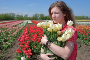 На Буковине стартовал фестиваль тюльпанов