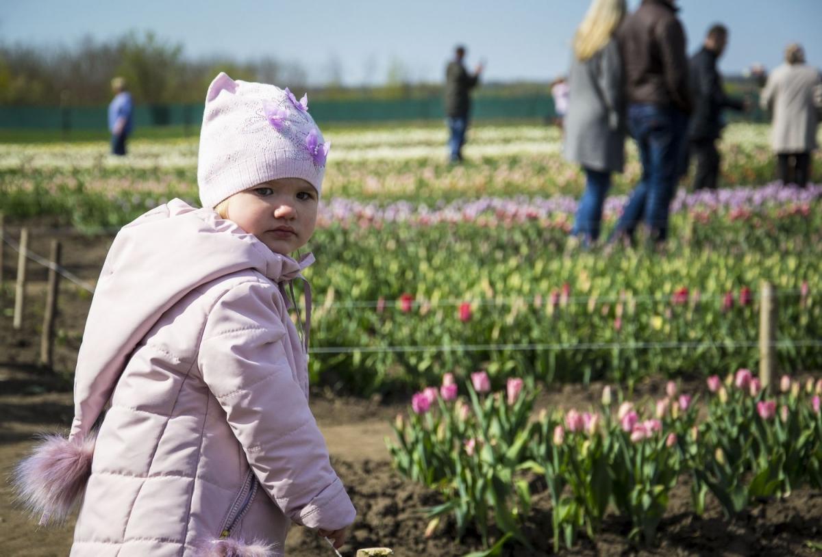 На Буковине стартовал фестиваль тюльпанов На Буковине стартовал фестиваль тюльпанов 4 5