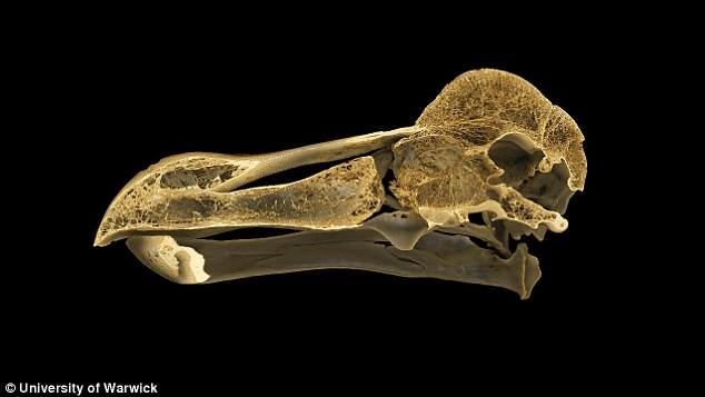 Ученые разгадали тайну вымершей птицы додо Ученые разгадали тайну вымершей птицы додо 4B4F959D00000578 5634989 image a 13 1524152957709